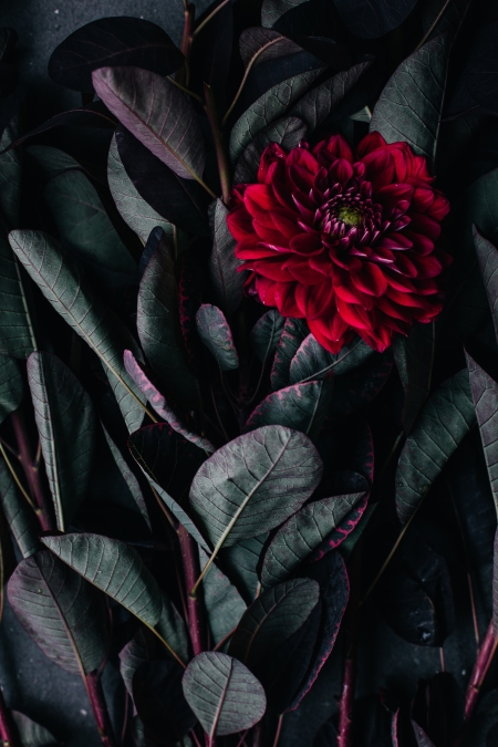 Death_to_stock_photography_bonus_floral_1